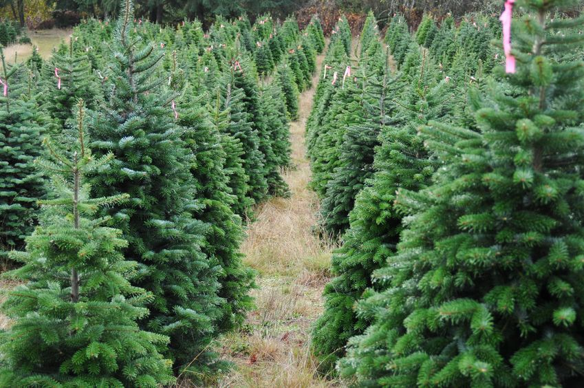 Get into the Holiday Spirit: Where to Buy Your Christmas Tree and ...